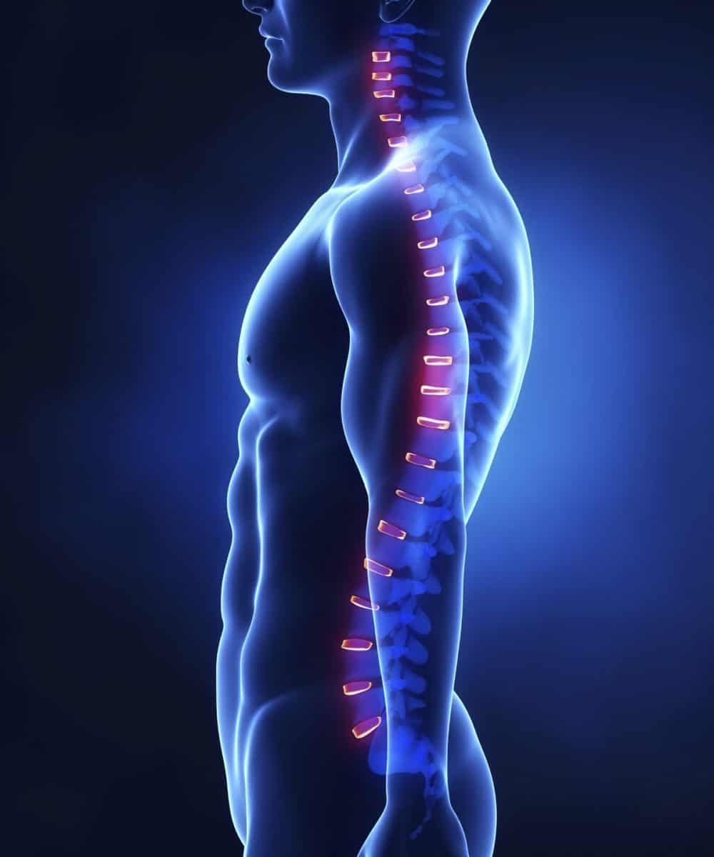 In Search Of Excellence Body Physics The Spinal Engine World